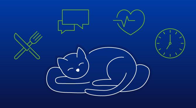 Titelbild mit Katze